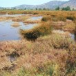 Αντιδράσεις περιβαλλοντικών οργανώσεων προκαλεί η απόφαση της κυβέρνησης για καταργήσεις και συγχωνεύσεις των 29 Φορέων Διαχείρισης προστατευόμενων περιοχών